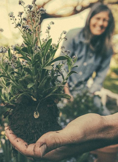 Paysagiste Royan Conception Et Entretien De Jardin Royan